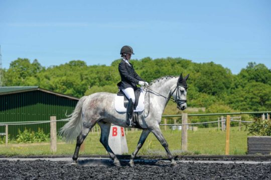 Competing in dressage