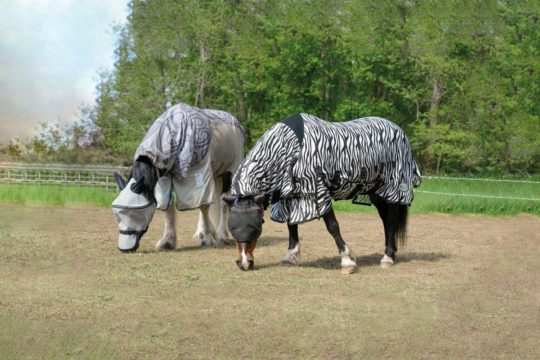 Horses grazing in fly rugs