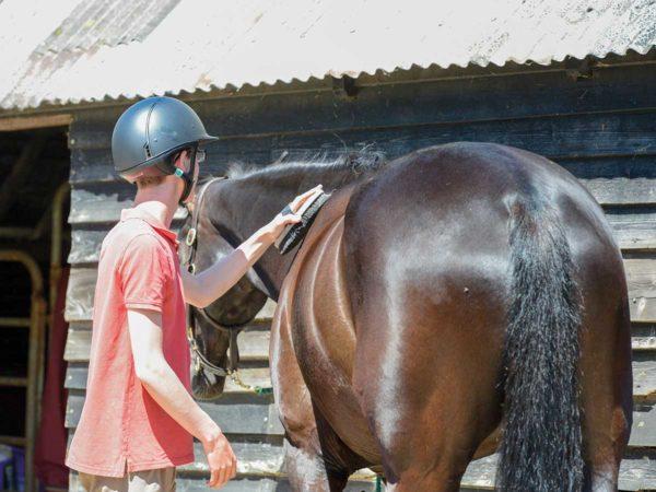 Boy brushing horse