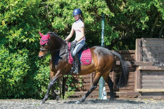 Pony cantering in the school
