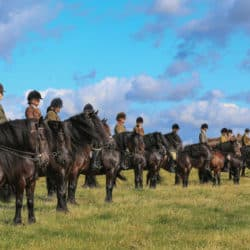 Dales Ponies showing class