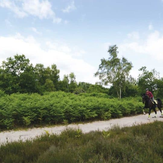 Hacking out in forest, horse cantering