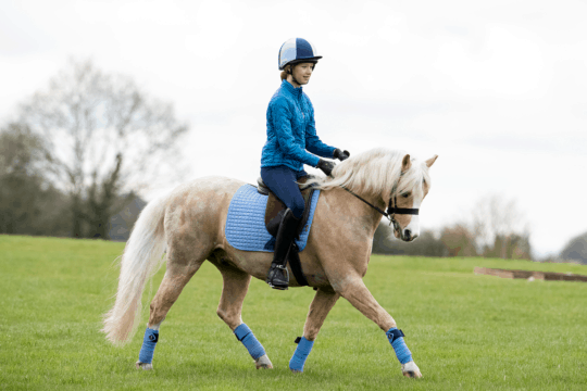Palomino pony being ridden